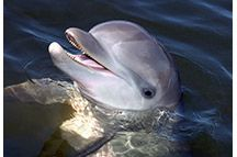 Swim with the dolphins in the Florida Keys -- I want to go back to Islamorada -- so beautiful!  :)