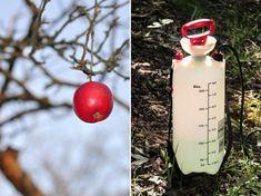 A lemosó permetezés a vegyi növényvédelem alapja! Elvégezhető ősszel, lombhullás után, vagy a tél végén, rügyfakadás előtt.