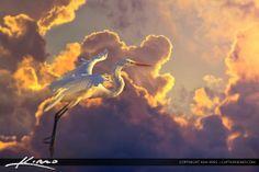 White Egret Inflight