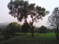 Hol vagy Karancs? Köd mőgött?  :)