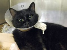 9/17sl PLEASE SAVE ME!💙💚💛💜DOH - V HAS 4 PUNCTURE WOUNDS FROM UNKNOWN SOURCE