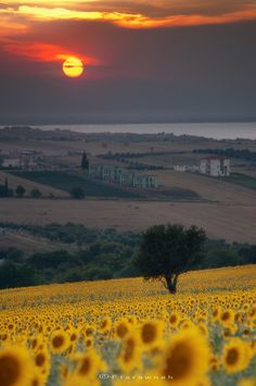 Summer's sun in Greece. - Landscape