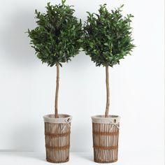 Decks gardens on pinterest hedges outdoor spaces and for Fertilizing olive trees in pots