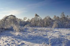 Ice forest near Moscow, Russia
