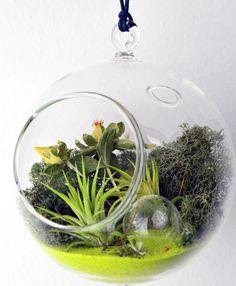 Artículos similares a Planta de aire terrario / / colgante Orbe de cristal / / Tillandsia Ionantha / / arena verde / / musgo de Reno / secado de flores / / jardín interior en Etsy