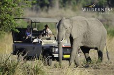 Ruckomechi Camp - Mana Pools National Park lies at the heart of the Zambezi Valley, where the Zambezi River meanders for 300km to the Mozambican border. It is a remote, beautiful place with spectacular views of the broad flowing river, floodplains, the tree canopy and the mountains of the Rift Valley escarpment over the border in Zambia.