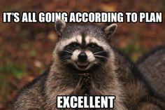 Evil_Raccoon.jpg (580×387)