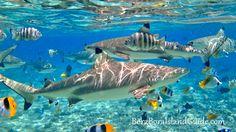 "List best things to do in Bora Bora (lagoon tour,step foot on a Motu that have Polynesian picnic,snorkel at Coral Gardens esp at ""aquarium"" has most fish,swim w/sharks,swim at Matira Beach-rated #1 beach by CNN,eat at bora Bora Yacht Club where fishing boats dock & deliver fresh catch try Mahi Mahi Burger & historic spot"