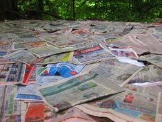 Newspapers as a weed barrier / mulch? Great Article! I'll have to try this!