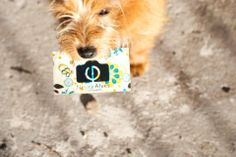 Garoto propaganda! =) #dog