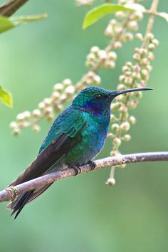 Hummingbird - sp?? by Stephen Kelly Pictures*