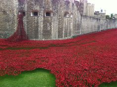 Tower of London - A very moving sight, there will be over 888,000 poppies, one for every life lost in WWI