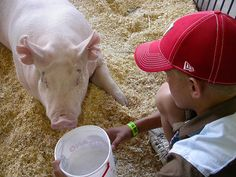 Wisconsin State Fair - Governor's auction pig by sokref1, via Flickr