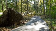 whitemarsh preserve trail during the clean up after hurricane matthew. 10/16/2016