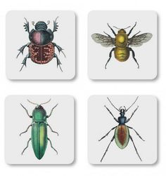 Magpie Set Of 4 Insect Coasters: The Curios Range by Magpie has now expanded to include this wonderful set of 4 gift boxed coasters featuring insect illustrations. The coasters are cork backed with a lacquer coasting. Globes Terrestres, England Houses, Cork Coasters, Bee Design, Matching Gifts, Unusual Gifts, Magpie, Natural History, Coaster Set