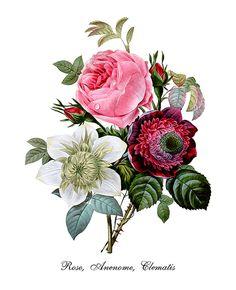 Vintage Botanical Print Roses Print Rose Anemone Print
