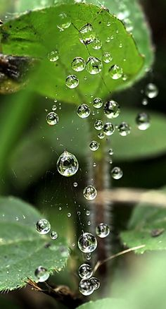 Dew drops, microphotography38