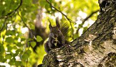 NAŠE ZAHRADY: Máme rádi přírodu. A Stanislav ji vyfotil na strom...