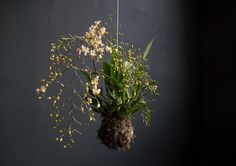 Hanging Gardens || Interesting way to display your favorite plants