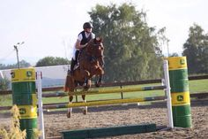 Show jumping