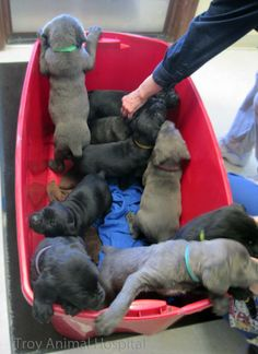 A peek inside the tub of pups. How can it contain that much cuteness!?