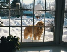 We have had so much snow recently that my dog can just look in the window when he wants to come in