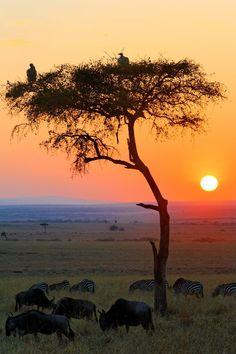 Sunrise in Masai Mara National Reserve, Kenya. Beautiful scenery from an African safari.