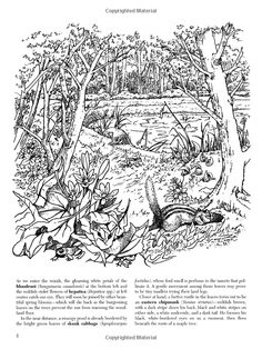 A Walk In The Woods Coloring Book Dover Nature Amazon