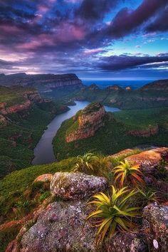 Canyon Aloes ~ Blyde River Canyon, Mpumalanga, #SouthAfrica    by Mark Dumbleton