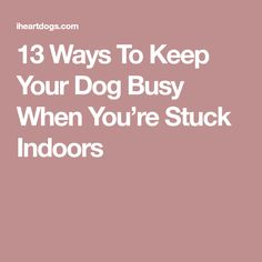 13 Ways To Keep Your Dog Busy When You're Stuck Indoors