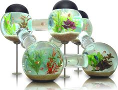 Fish appartements :-D