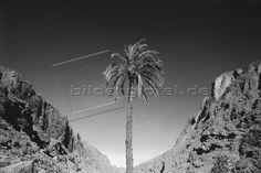 Marokko; Palme in Felsenschlucht