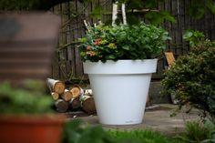 flower pot gianto nunoni terraform.pl