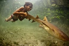 A young boy with home-made wooden goggles grasps the tail of a tawny nurse shark as it pulls him through the shallow waters of the South China Sea. The Bajau people of Sabah, Sulawesi, can free-dive up to 20 metres deep when hunting for fish, pearls and sea cucumbers on the sea-bed. Known as 'sea gypsies', the Bajau spend most of their lives at sea; when they free-dive, they can hold their breath for up to three minutes.