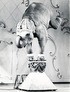 Elephant performance.  I am against the exploitation of animals for entertainment...that being said, I don't see why we can't enjoy the entertainment they once provided in a less enlightened time in history.  Just as I don't buy fur unless it's vintage (1950 or older).