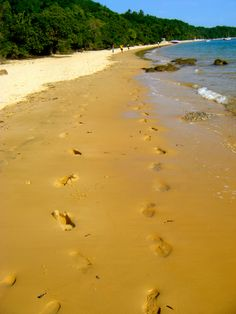 Footprints in the sand: Inhaca Island, Mozambique