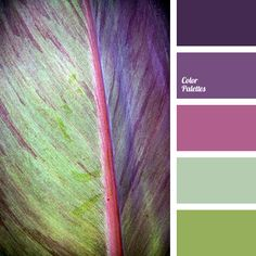 colour green, design palettes, green and purple, jade color, lime green, pale purple, shades of blue-violet, shades of green, shades of green and violet, shades of purple.