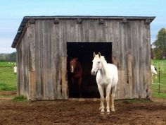 How To Build A Simple One Horse Barn