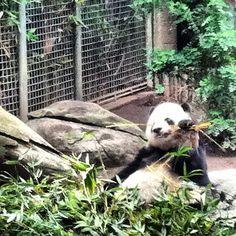 PHOTOS AnimalHuman Hugs That WIll Melt Your Heart Panda - 25 heartwarming moments animals hugging