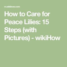 How to Care for Peace Lilies: 15 Steps (with Pictures) - wikiHow