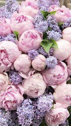 All Flowers, Fresh Flowers, Beautiful Flowers, Wedding Flowers, Flowers Online, Flower Backgrounds, Flower Wallpaper, Beautiful Flower Arrangements, Floral Arrangements