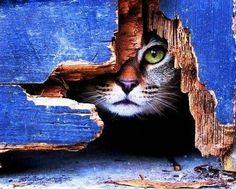 Peeking