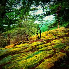 Mossy rocks in Stanley Park, Vancouver BC