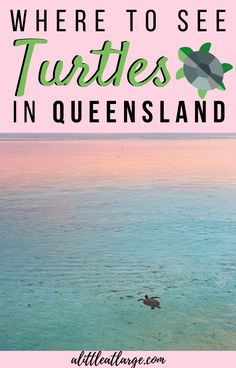 Planning a Queensland road trip? Don't skip out on the local wildlife, these are the best places to see turtles in Queensland. #turtles #wildlife #queensland #exploreaustralia #wildlifeencounters Australia Honeymoon, Australia Travel, Family Adventure, Adventure Travel, Travel With Kids, Family Travel, Glass Bottom Boat, Sea Birds, Boat Tours