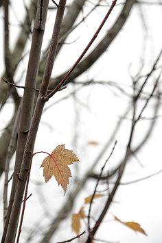 Conversation With Autumn