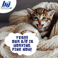 That moment when BV Air Conditioning and Heating finally fixed your A/C.  Oh yes! 😍 Grand Prairie, That Moment When, Fix You, Conditioning, Memes, Cats, Animals, Gatos, Animais