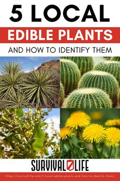 These plants are all VERY common, VERY prevalent and VERY easy to identify. The best part is, even in the dead of winter, ALL these plants can be a food source. #localedibleplants #edibleplants #survivalfood #survival #preparedness #survivallife Survival Life, Survival Food, Homestead Survival, Wilderness Survival, Camping Survival, Survival Skills, Bug Out Bag, Tiny House Movement, Edible Plants