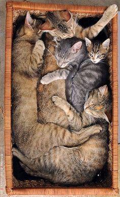 KITTY TETRIS #photo by ZoranPhoto on DeviantArt #cat cats kitten animal pet fluffy fur cute adorable amazing nature beautiful
