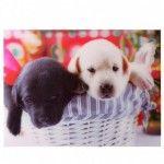 Image 3D - Bébés Labradors dans un Panier 29.5 x 39.5cm
