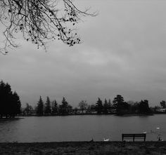 Ellis Lake, Marysville, CA. Windy, rainy day. January 2017.